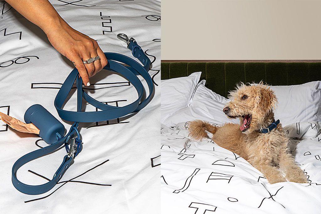 Dog Gear for The Design Lover