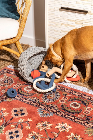 Wild One Toys with Dog