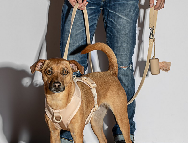 Wild One Walk Kit in Tan Harness