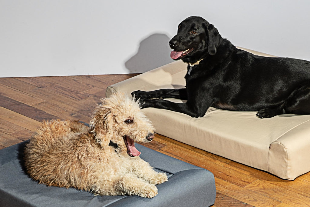 Wild One Memory Foam Dog Bed