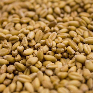 Raw (unmalted) Wheat