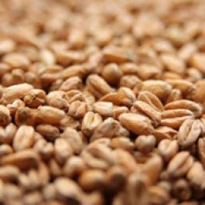 Red Wheat Malt, Briess