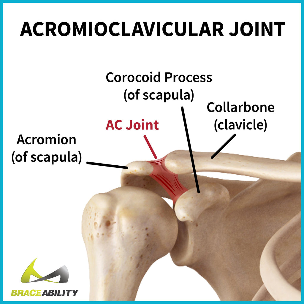 the acromioclavicular joint in the shoulder can be injured from ligament tears