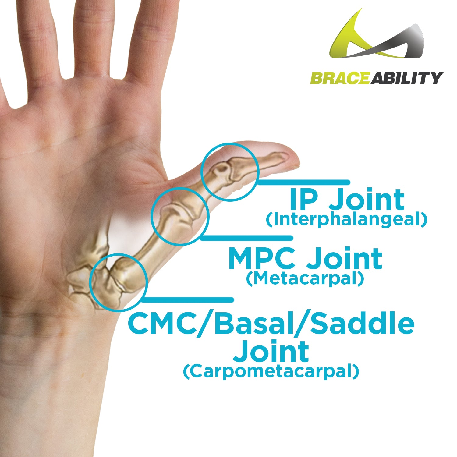 Hard Plastic Thumb Brace | Arthritis Splint & Basal Joint Immobilizer