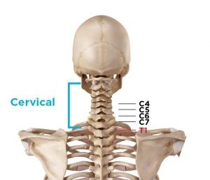 cervical neck vertebrae and how each one contributes to vertebrae pain