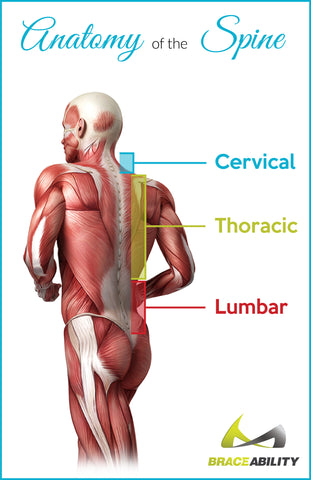 Anatomy of where you would feel lumbar, thoracic or cervical facet syndrome