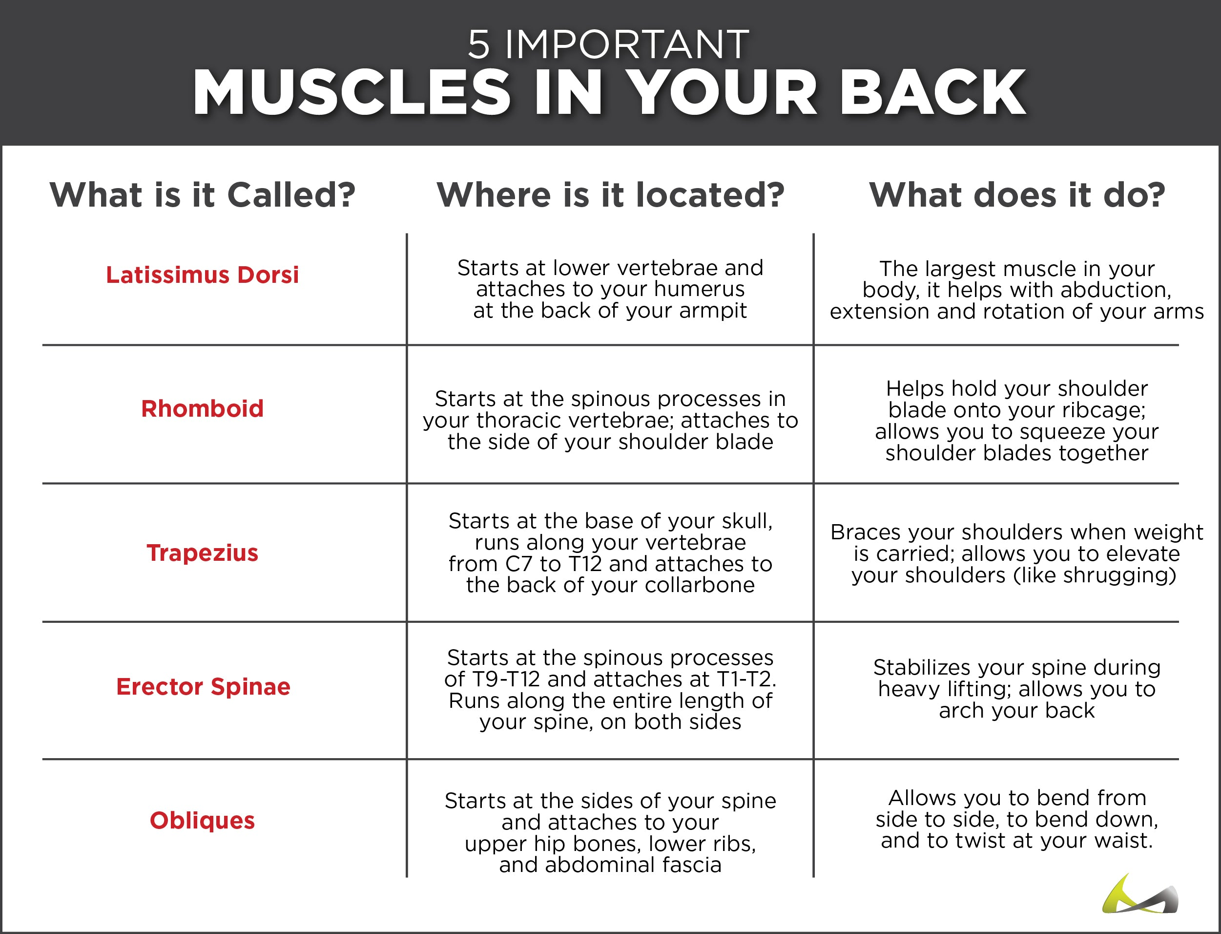 list of the muscles in your back, where they originate and what they do