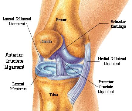 knee anatomy and ligament tears such as acl, pcl, lcl, and mcl