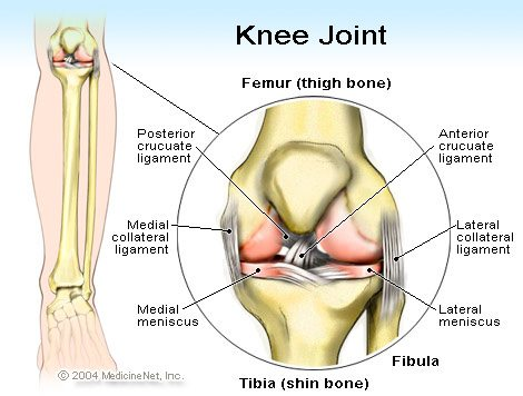 anatomy of knee joint labeled with areas that can cause knee pain