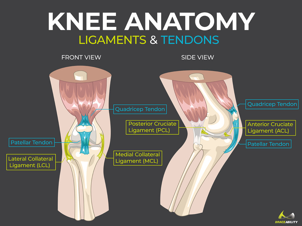 learn about knee anatomy including different ligaments and tendons