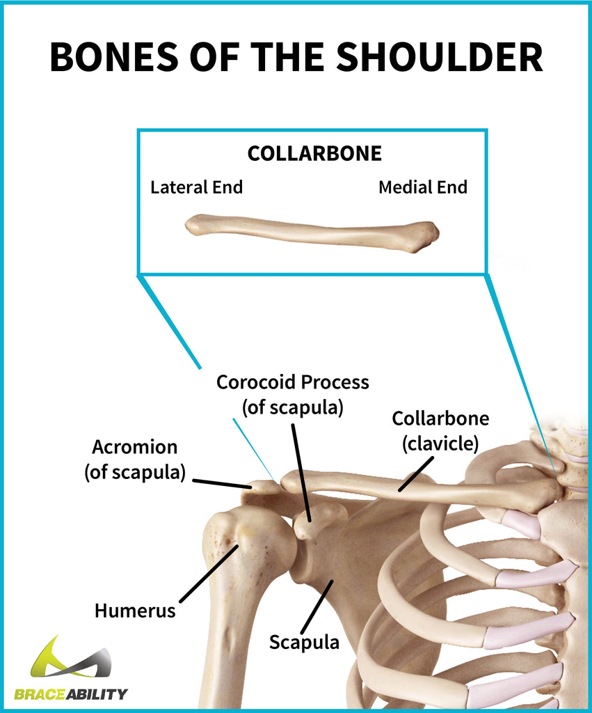 learn about shoulder bone anatomy including the collarbone or clavicle