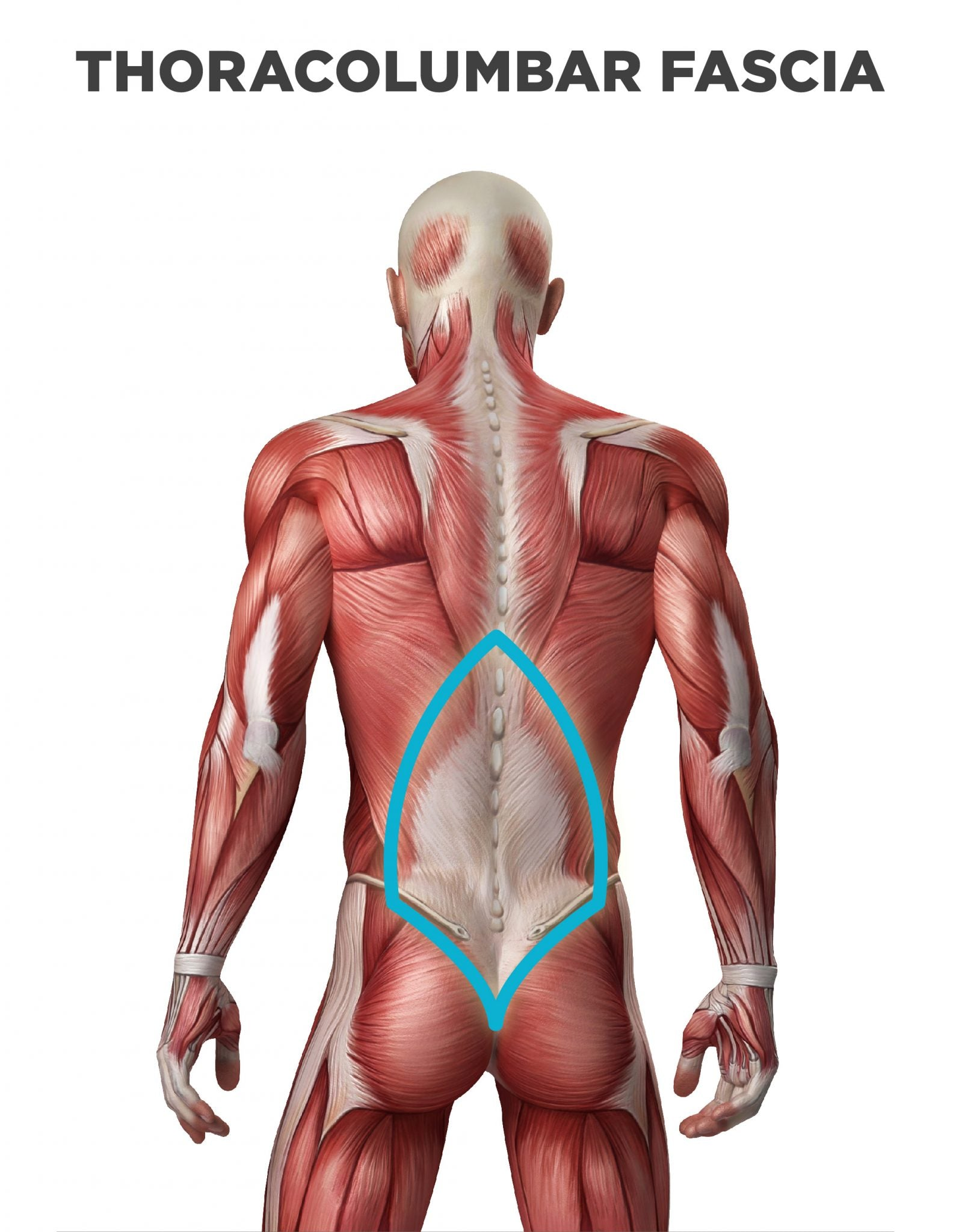 Thoracolumbar junction in the lower back location of SI joint pain