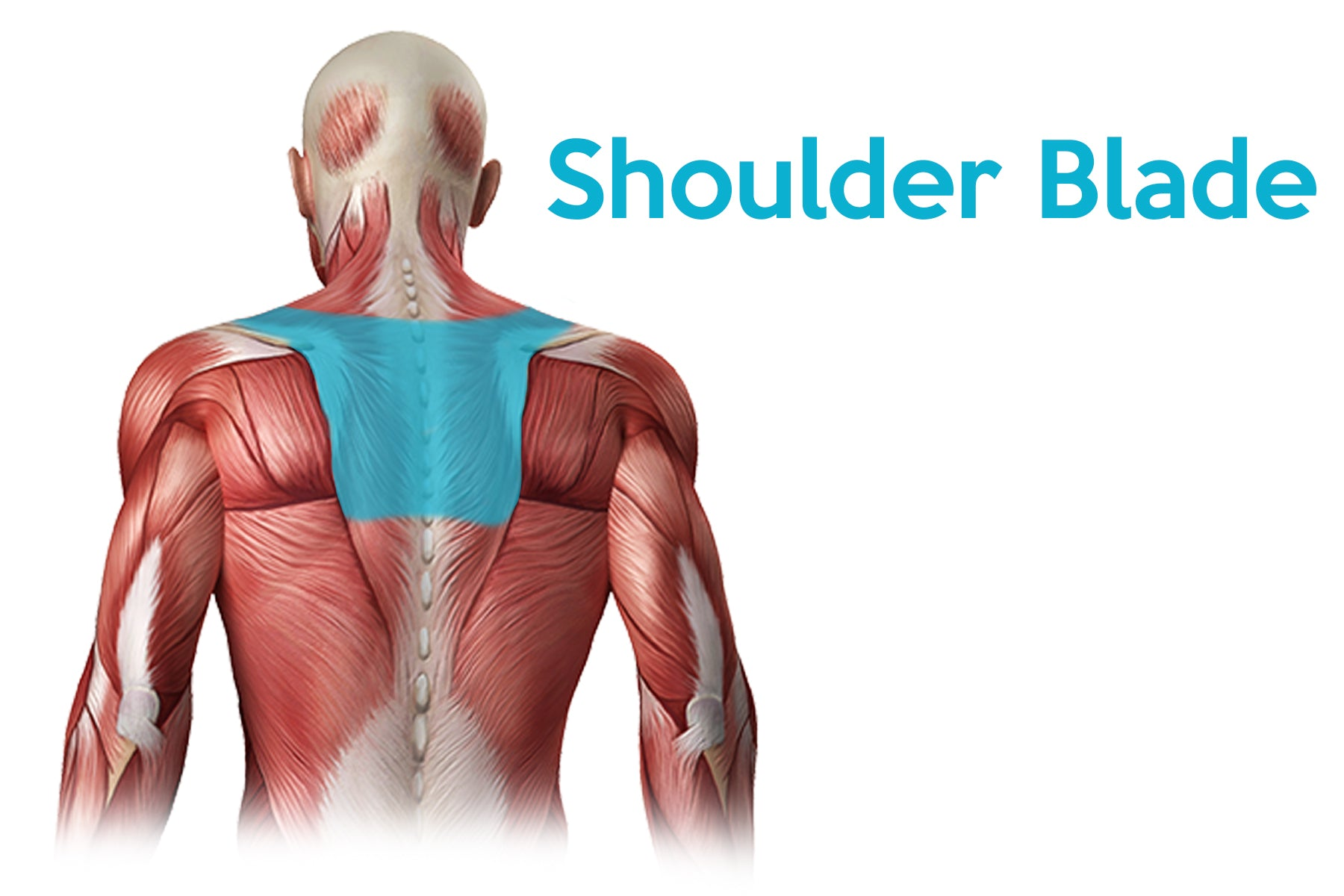learn more about upper back and shoulder blade pain