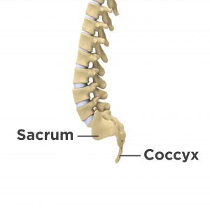 lower back pain labeled in the sacrum and tailbone