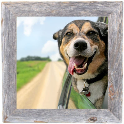 BarnwoodUSA Rustic 10 by 10 Inch Picture Frame living room decor