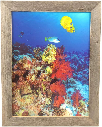 BarnwoodUSA 18 1/8 x 14 Fish with Coral Reef 3D Lenticular Picture Artwork Unique Decor Holographic Optical Illusion Framed Barnwood Underwater Fish 3D Poster Framed 1.5 inch Molding