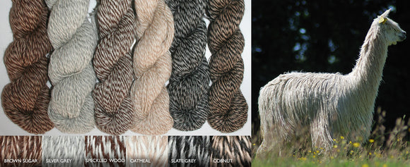 6 marl shades of Suri Alpaca 4ply with a picture of an alpaca