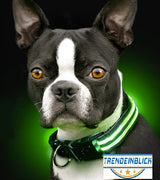 Glow in the dark led safety collar - Trendeinblick.com