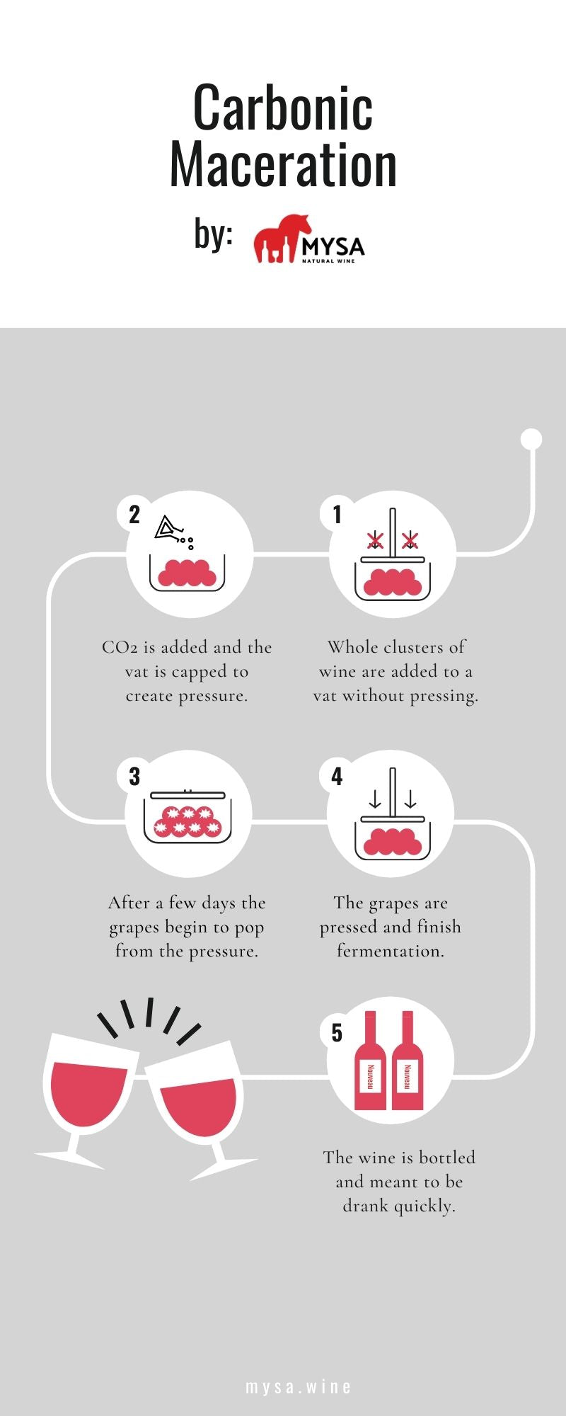 Carbonic Maceration Infographic
