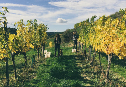 Natural Wine Producers in Kamptal Austria