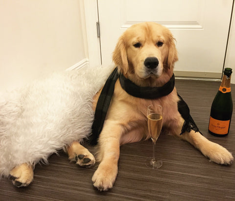 Norman the Wine Dog