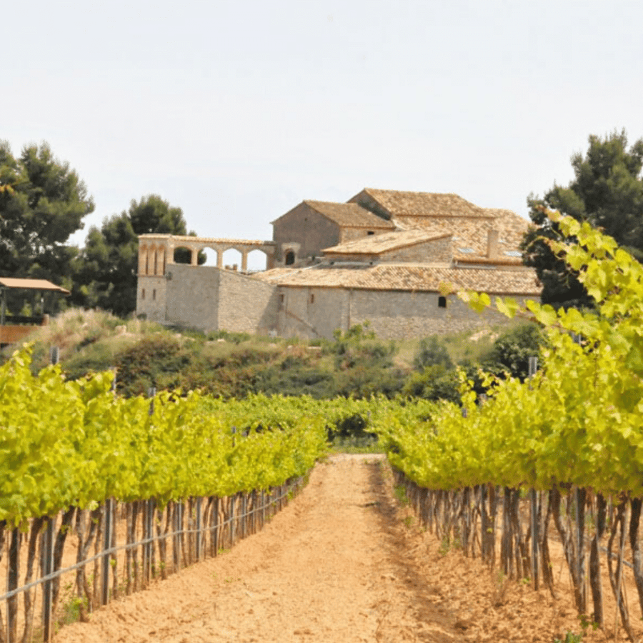 clos-lentiscus-vineyard