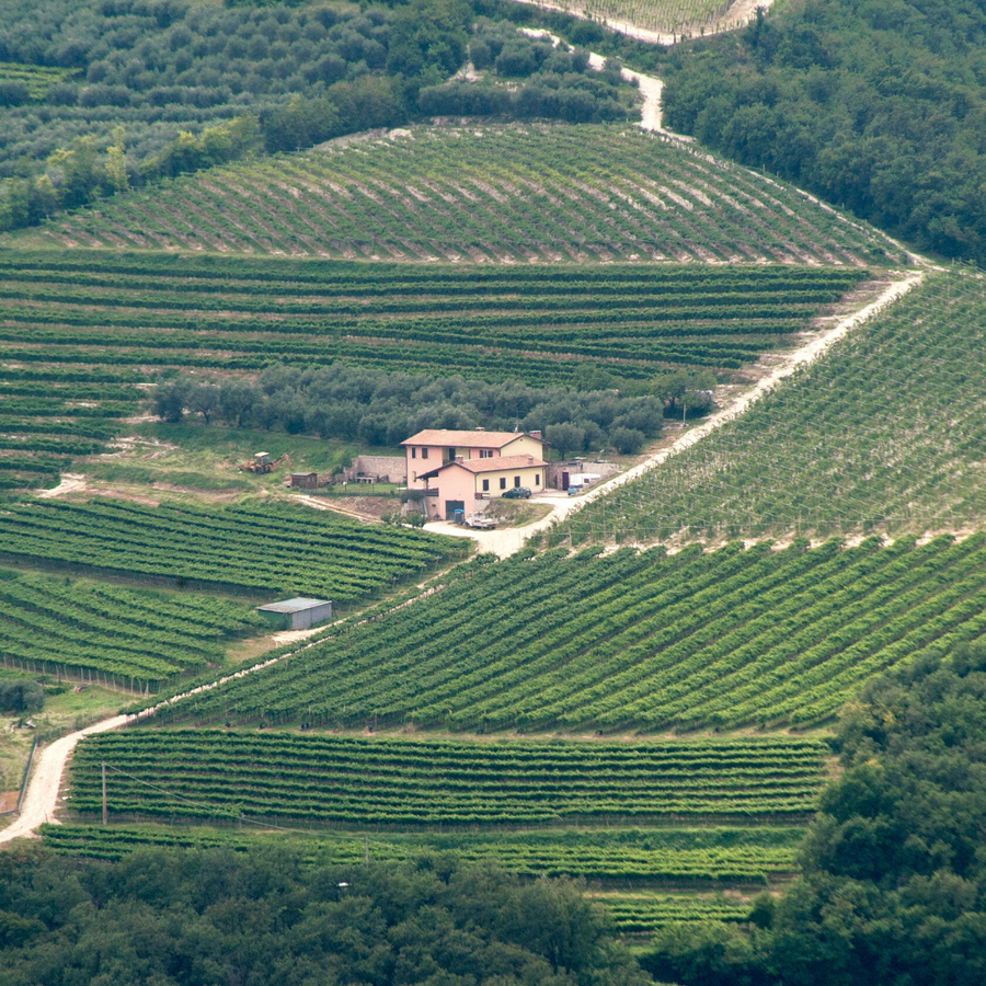 il-monte-caro-vineyard