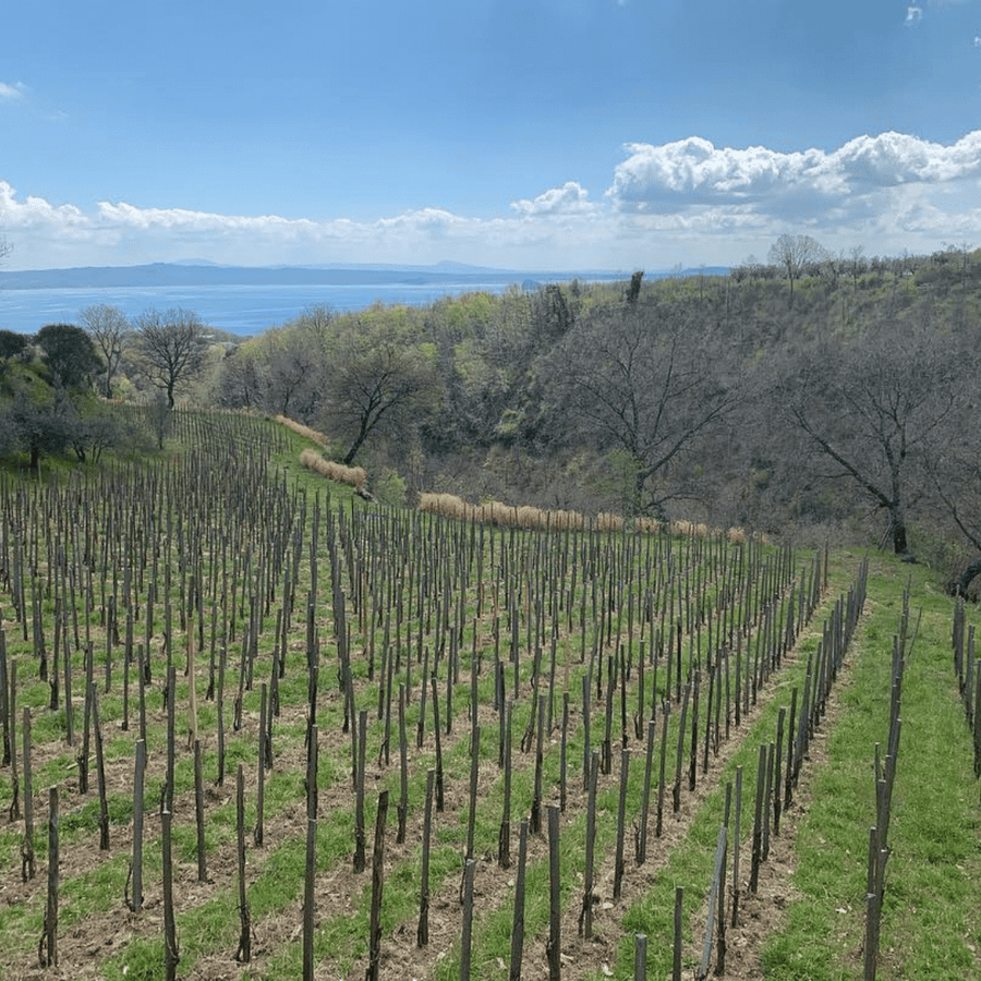 le-coste-vineyard