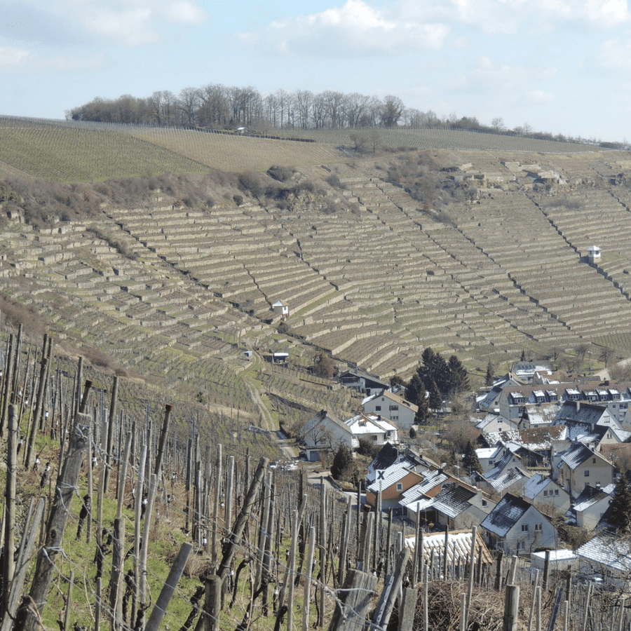 roterfaden-and-rosswag-vineyard