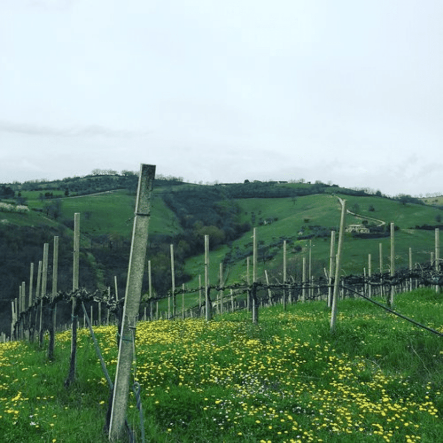 vini-di-giovanni-vineyard