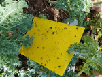 20-Pack Dual-Sided Yellow Sticky Traps for Flying Plant Insect Like Fungus Gnats, Aphids, Whiteflies, Leafminers