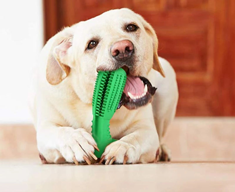 Dog Chewing on Dog Toothbrush Chew Toy