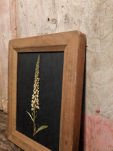 Photography frame, pressed flower