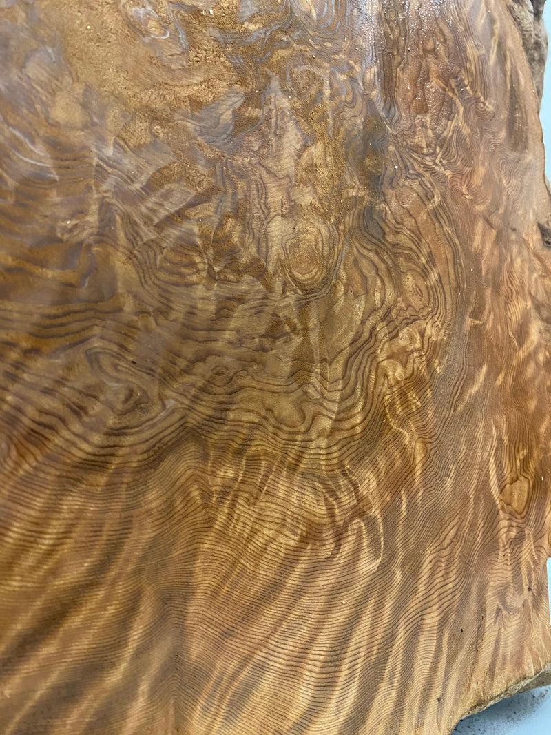 "Redwood Burl Slab - 3"" x 32"" x 26"""