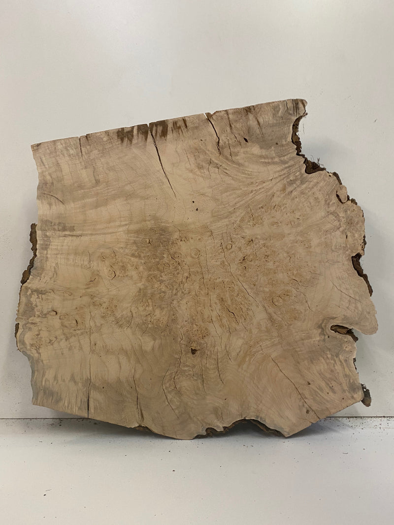 "Maple Burl Slab - 4"" x 23"" x 24"""