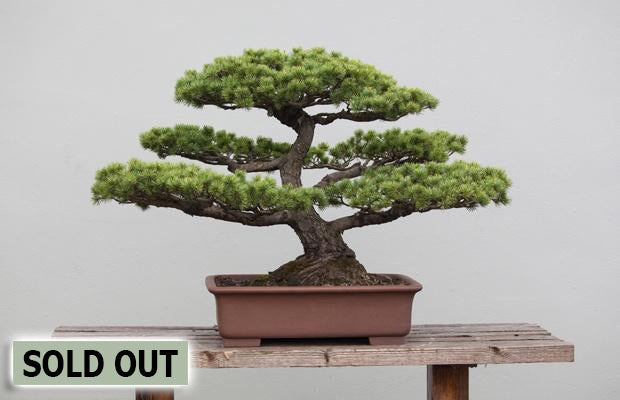 March 20th - Bonsai Trees for Beginners (12pm - 2pm)
