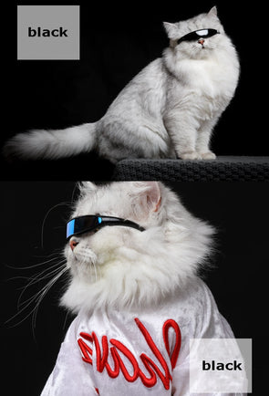 Galactic Pet Sunglasses