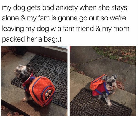 @mybestiesays @marice_vargas instagram anxious dog backpack meme