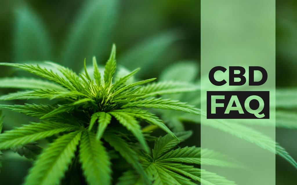 FAQs About CBD.