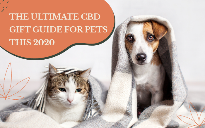 The Ultimate CBD Gift Guide for Pets this 2020