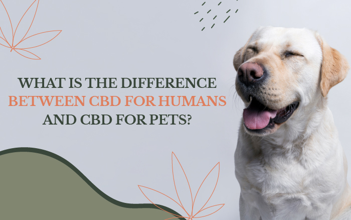 What Is the Difference Between CBD for Humans and CBD for Pets?