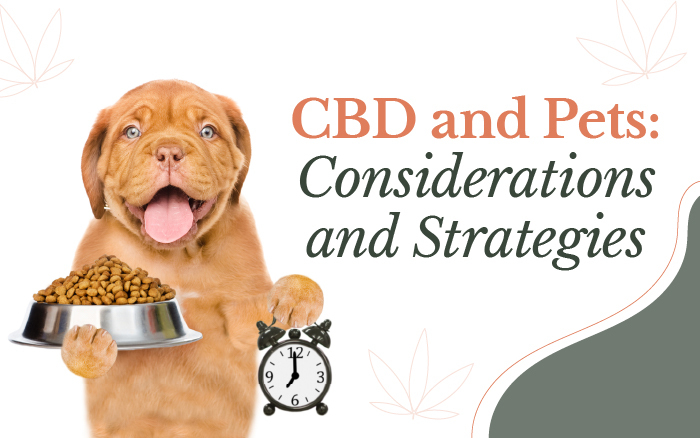 CBD for Pets [Research-Based Regimens, Considerations, and Strategies]
