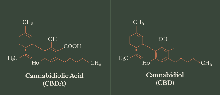 CBD oil and its components