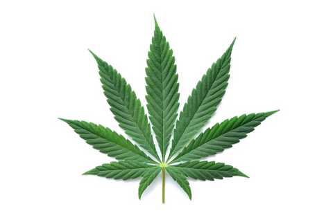 What Is the Difference Between CBD & CBG?