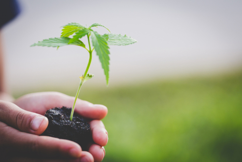Things To Know About How to Grow Hemp