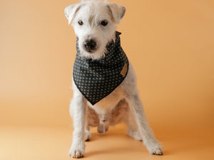Black Betty - Dog Bandana