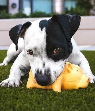 Dog And Puppy Toys For Chasing And Fetching