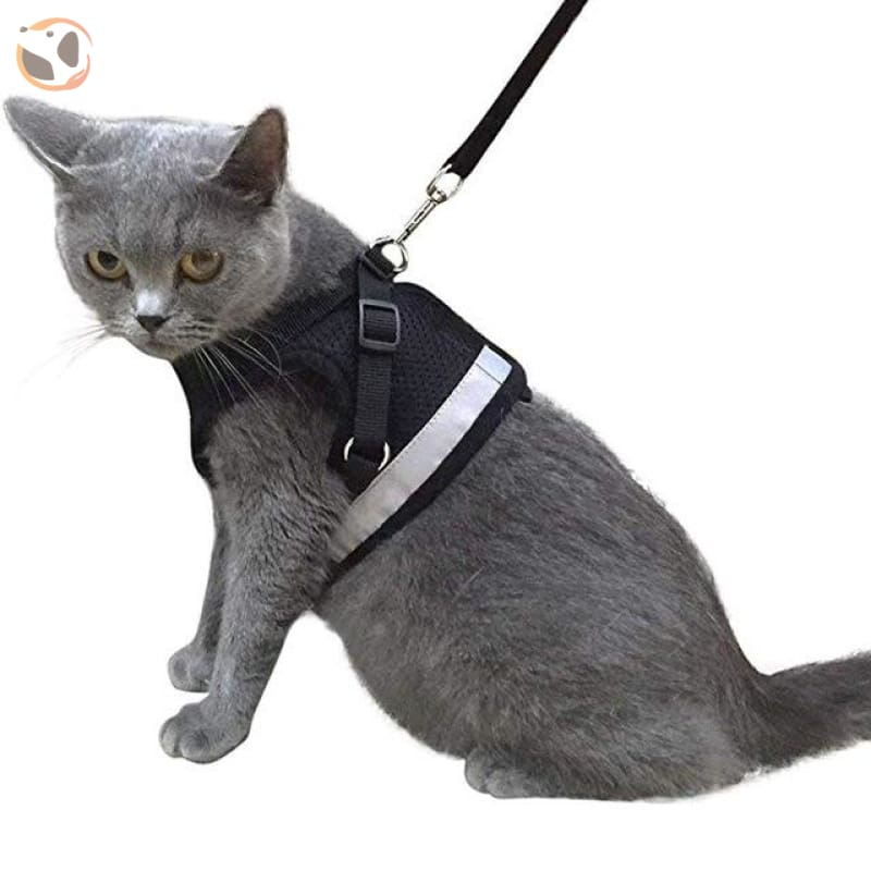 Adjustable and Reflective Pet Harness - black / S