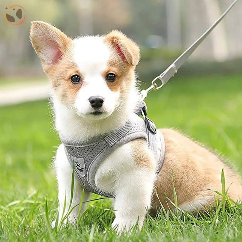 Adjustable and Reflective Pet Harness - gray / M