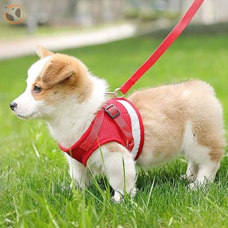Adjustable and Reflective Pet Harness - red / M